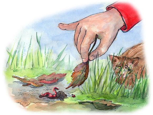 kinderbuchillustration-regenwurm-im-garten-von-agnes-zug.jpg