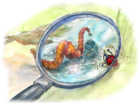 kinderbuchillustration-regenwurm-unter-der-lupe-von-agnes-zug.jpg